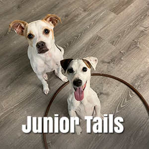 link to live webcam to junior tails in Honolulu