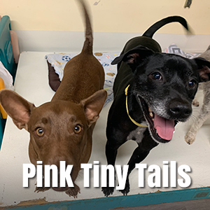 link to live webcam feed for pink tinty tails in Honolulu