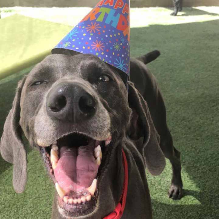 image of happy dog with birthday hat on