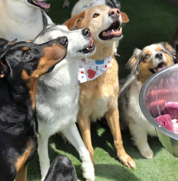 image of dogs waiting for treats