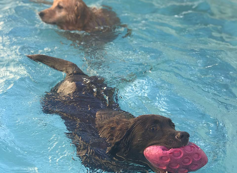 image of cute dog ready to go swimming